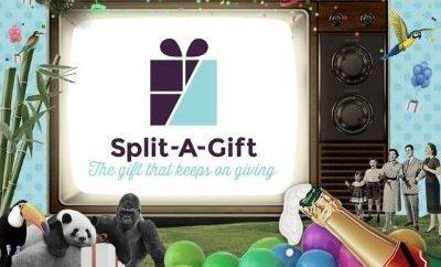 Split A Gift Bliss Shine For Cancer